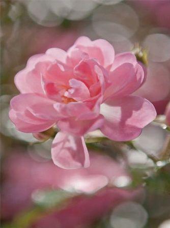 Fotótapéta Bouquet 4-713