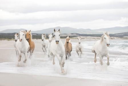 Fotótapéta White Horses 8-986