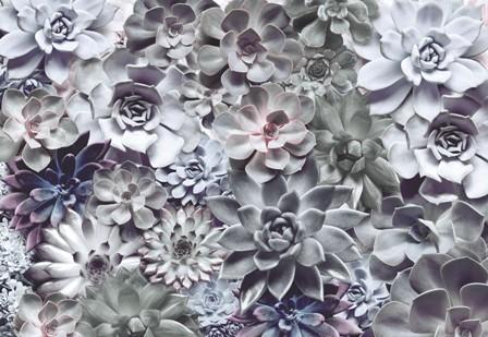 Virágos fotótapéták